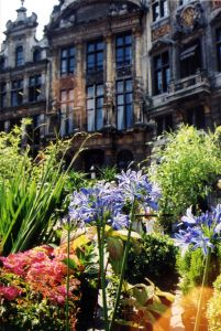 grand_place_flowers